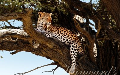 Incentives to Africa: Kruger to Cape Town Safari Expeditions